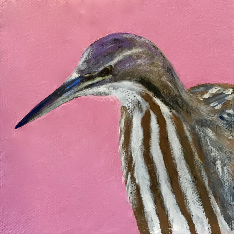 American Bittern, acrylic on canvas, 5 in x 5 in