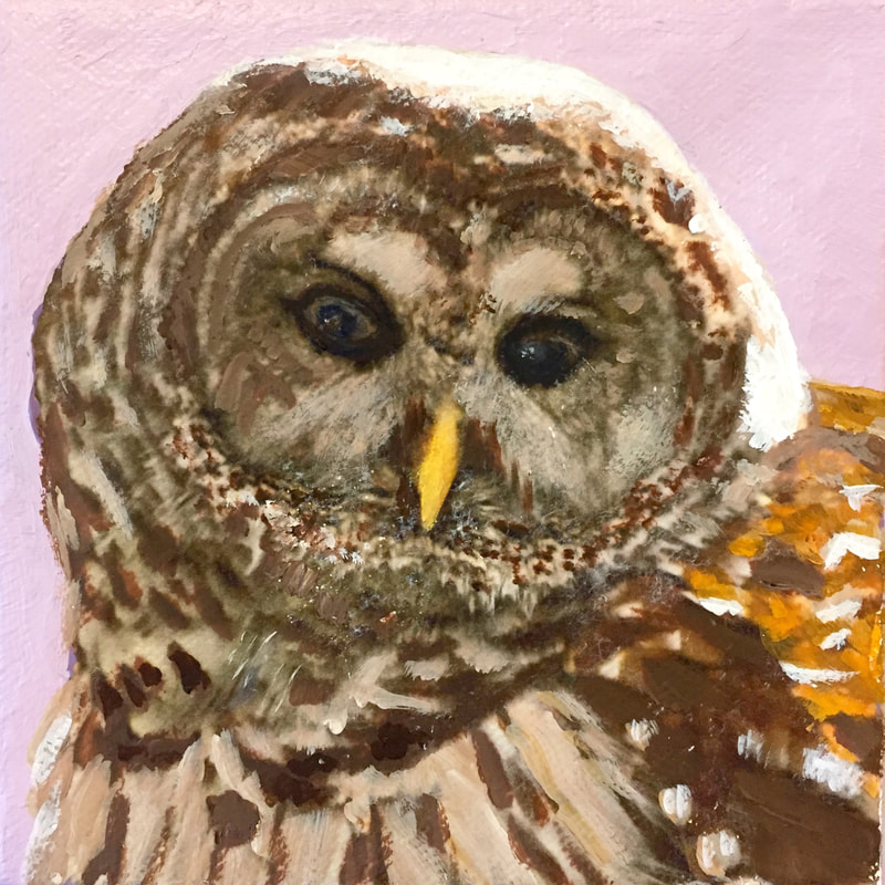 Barred Owl, acrylic on canvas, 5 in x 5 in
