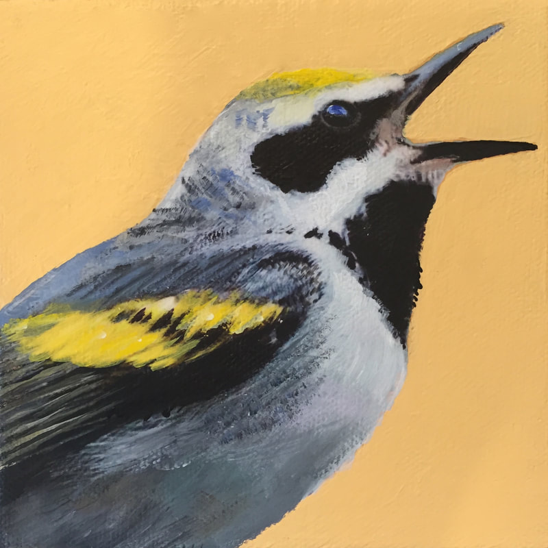 Golden-Winged Warbler, acrylic on canvas, 5 in x 5 in