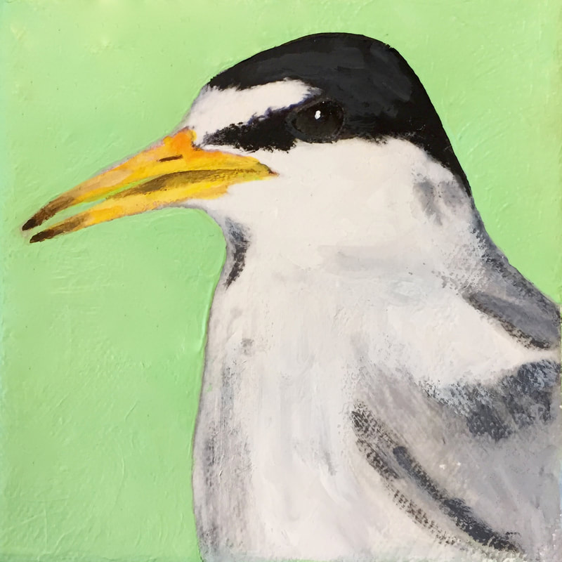 Least Tern, acrylic on canvas, 5 in x 5 in