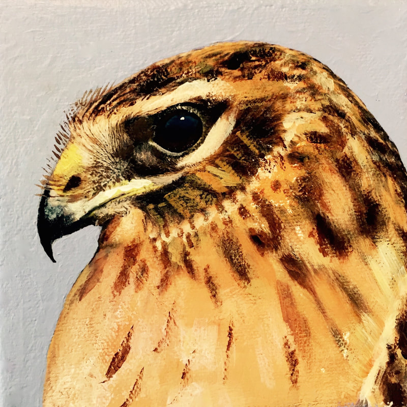 Northern Harrier, acrylic on canvas, 5 in x 5 in