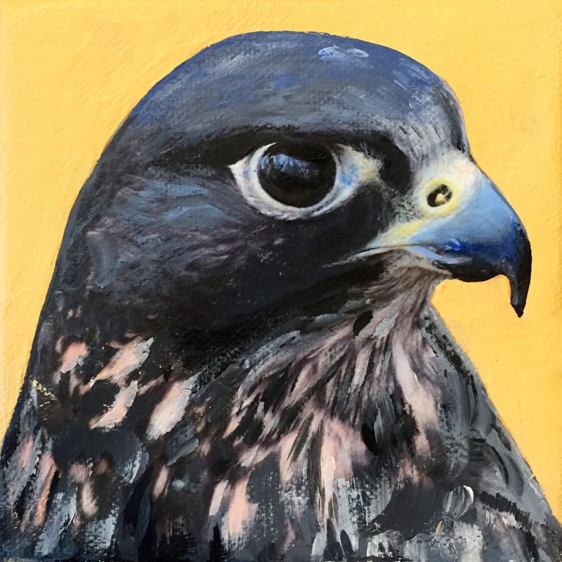 Peregrine Falcon, acrylic on canvas, 5 in x 5 in