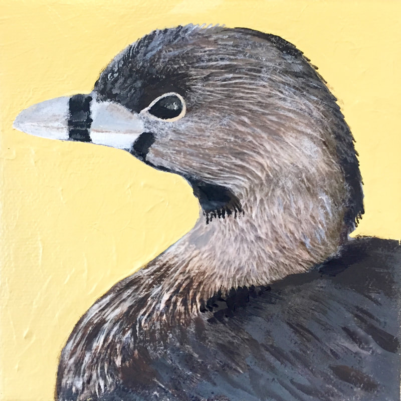 Pied-Billed Grebe, acrylic on canvas, 5 in x 5 in