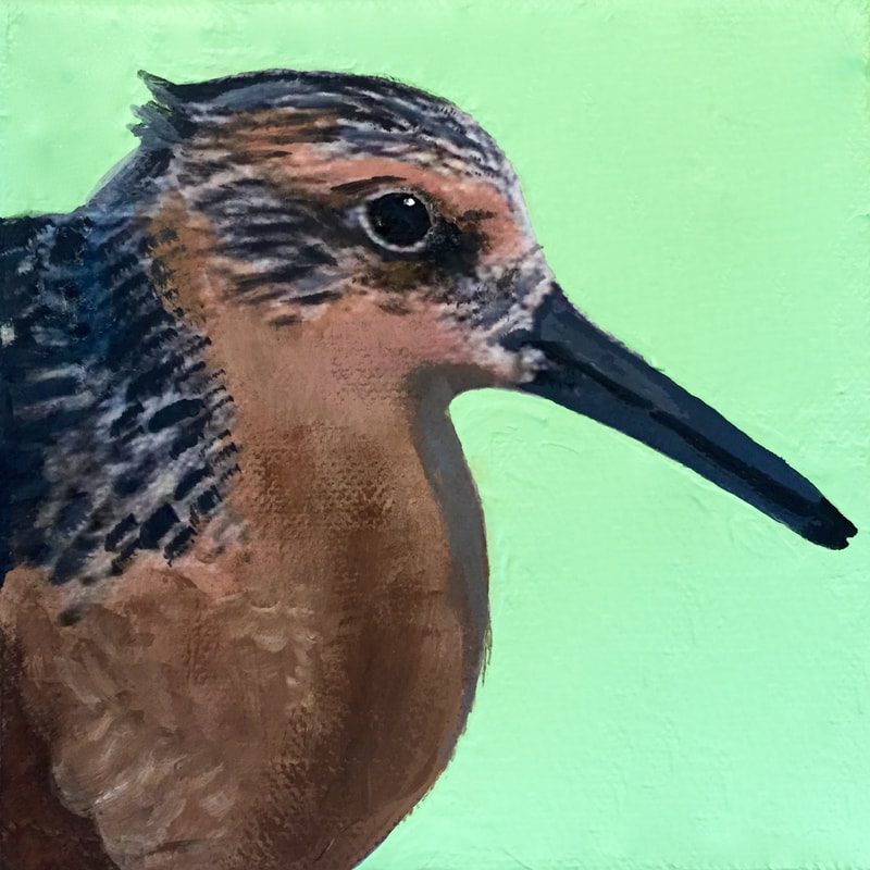 Red Knot, acrylic on canvas, 5 in x 5 in