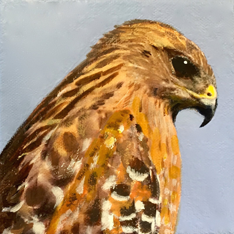 Red-Shouldered Hawk, acrylic on canvas, 5 in x 5 in