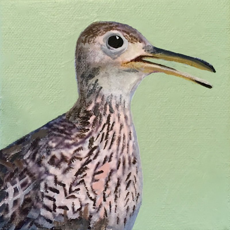 Upland Sandpiper, acrylic on canvas, 5 in x 5 in